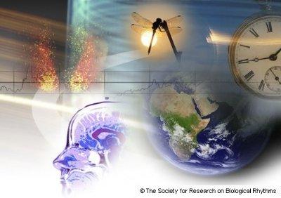 bioritmi-vplivi